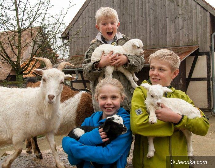 Region: Trojaczki w Naszym Zoo na początek wiosny