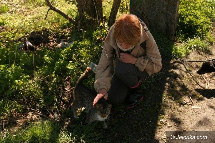 Jelenia Góra: Kotki szukają domu