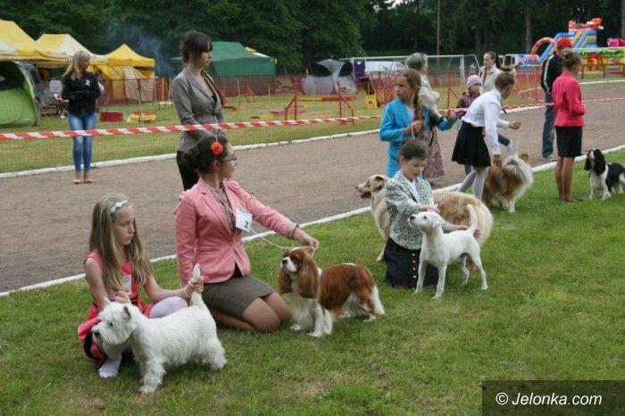 Jelenia Góra: Rasowe psy zaprezentowały się w Cieplicach