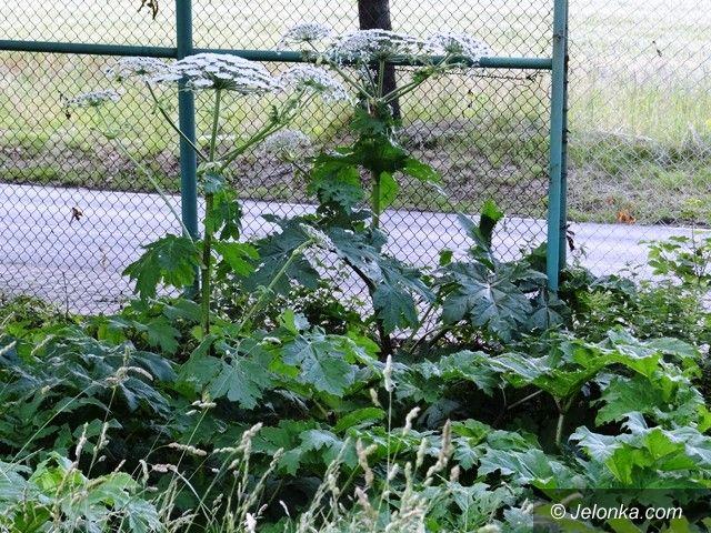 Jelenia Góra: Parzący barszcz na terenie boiska w Sobieszowie