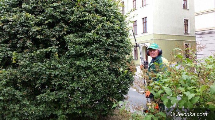 Jelenia Góra: Tworzy od lat w naszym mieście zielone rzeźby