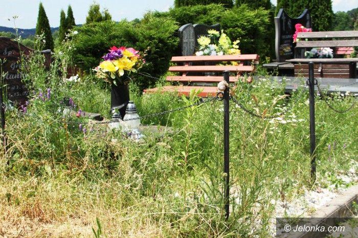 Jelenia Góra: Nie pamiętają o grobach bliskich, mogiły zarastają