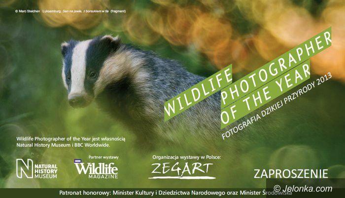 """Szklarska Poręba: Wystawa """"Fotografia dzikiej przyrody 2013"""""""