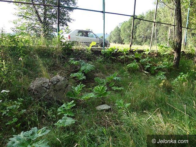 Jelenia Góra: Groźny barszcz nadal straszy w Sobieszowie