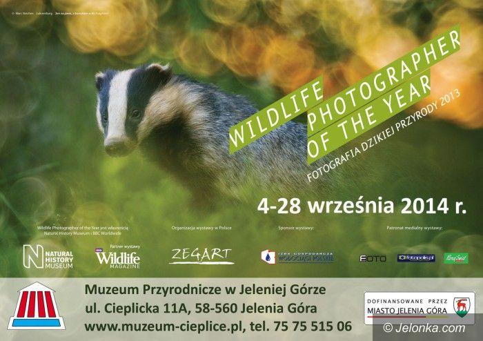 """Jelenia Góra: """"Fotografia dzikiej przyrody 2013"""" w Muzeum Przyrodniczym"""