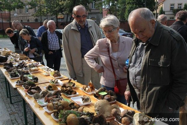 Jelenia Góra: Leśne bogactwo w dawnym Klasztorze Cystersów