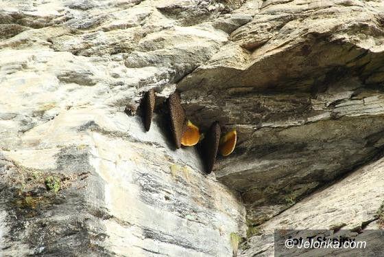 Jelenia Góra: O pszczołach i pszczelarstwie trzech kontynentów