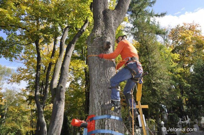 Jelenia Góra: Alpinistyczne prace na drzewach