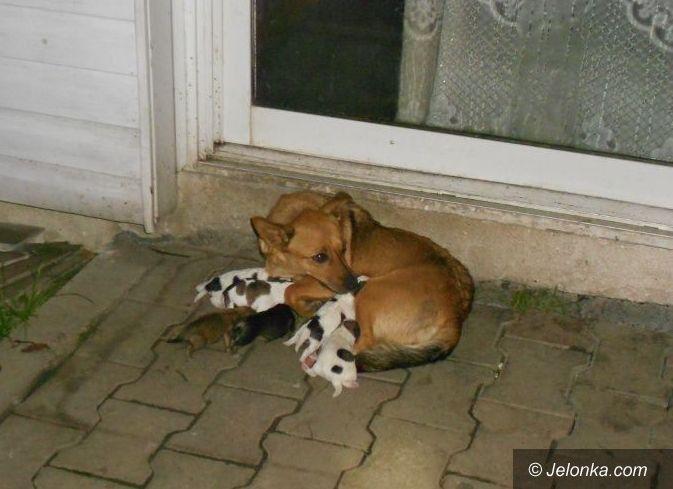 Jelenia Góra: Suczka ze szczeniakami wyrzucona na bruk