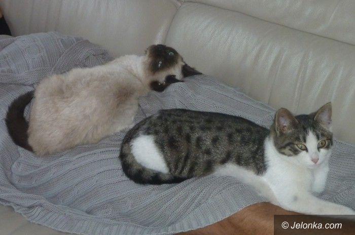 Jelenia Góra: Czy ktoś wie, gdzie są te kotki?