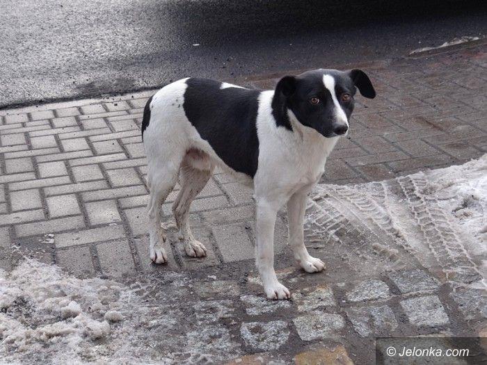 Jelenia Góra: Kto zajmie się psem błąkającym się po cmentarzu?
