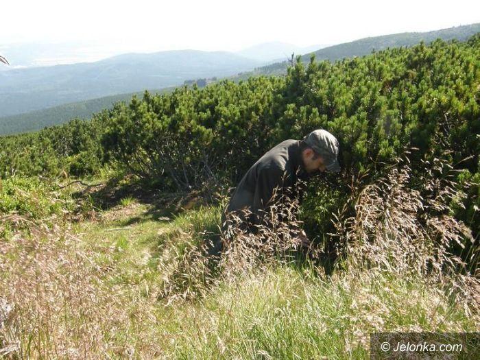 Region: W Karkonoszach znaleziono nowy gatunek grzyba