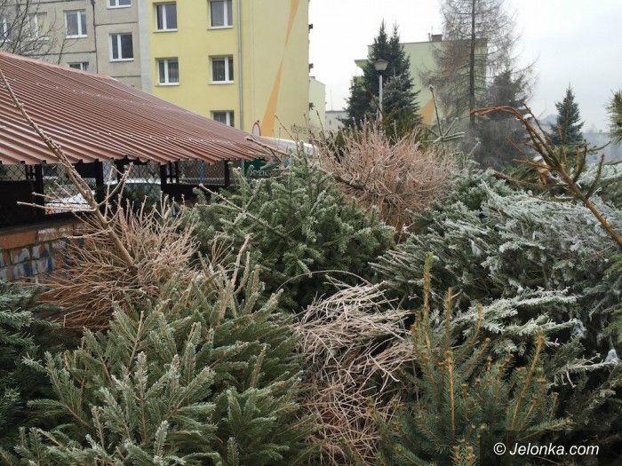 Jelenia Góra: Ze świątecznych choinek – wióry