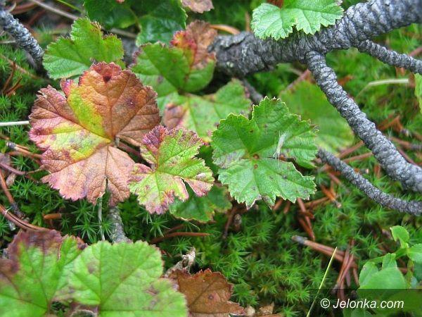 Region: Dzięki badaniom uratowane zostaną zagrożone rośliny
