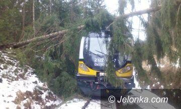Region: Dla bezpieczeństwa podróżnych 2400 drzew pod topór?