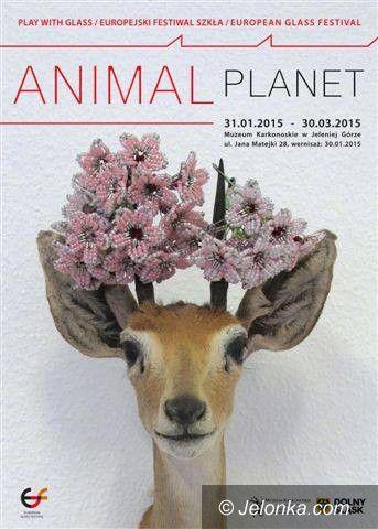 Jelenia Góra: Animal Planet w Muzeum Karkonoskim