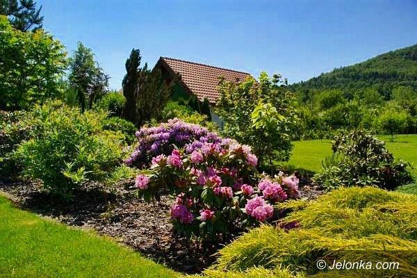Jelenia Góra: Przydomowe ogródki w Sobieszowie nagrodzone