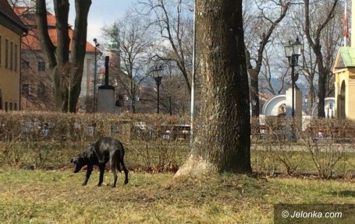 Jelenia Góra: Kto pomoże błąkającemu się zwierzakowi?
