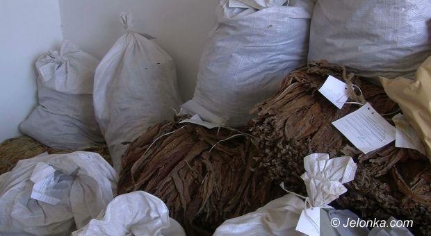 Jelenia Góra: Strażnicy graniczni zarekwirowali kilkaset kilogramów tytoniu
