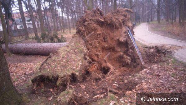 Jelenia Góra: Wiatr powalił kolejne drzewa w Zdrojowym. Park jest zamkniętyAktualizacja