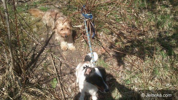 Jelenia Góra: Strażnicy uratowali czworonogi