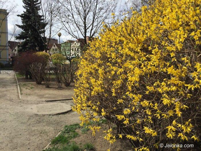 Jelenia Góra: Przybywa kwiatów w Jeleniej Górze