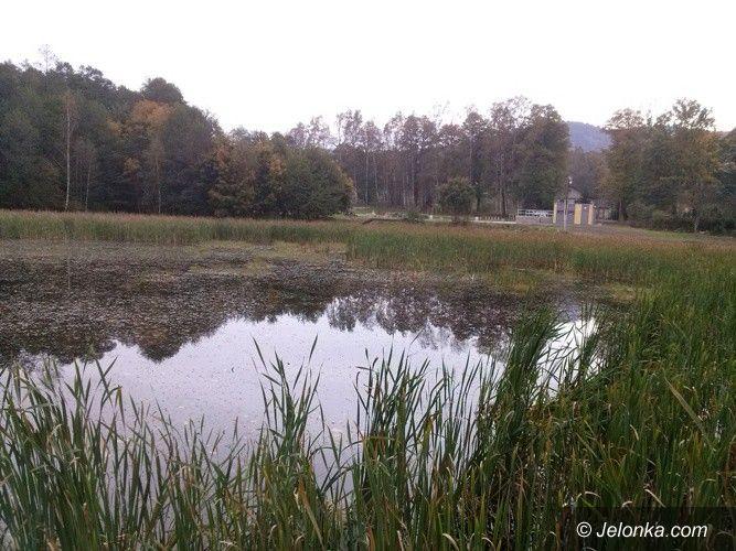 Janowice Wielkie: Staw przy Zielonej Dolinie do rewitalizacji