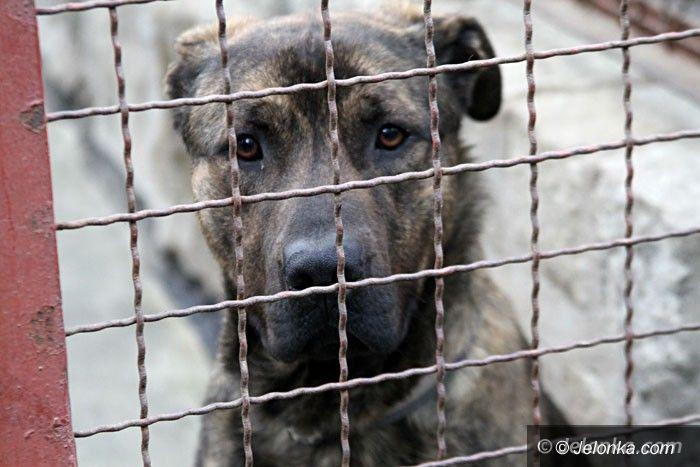 Jelenia Góra: W schronisku jest coraz mniej zwierzaków