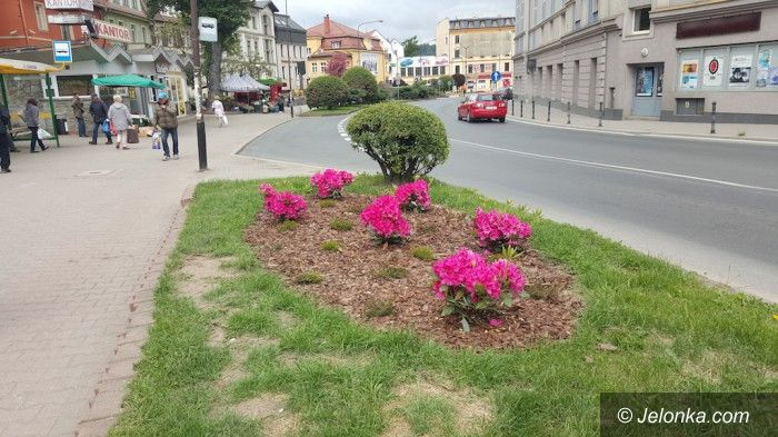 """Jelenia Góra: """"Wpadł"""" złodziej naszych miejskich kwiatów"""
