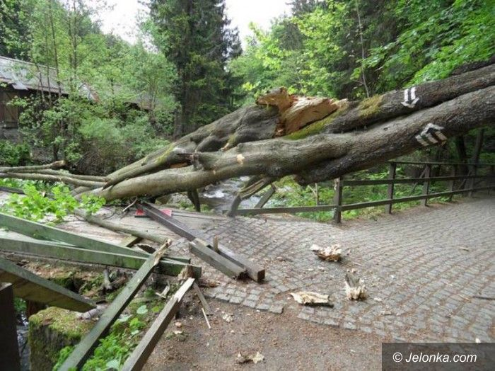 Szklarska Poręba: Drzewo na moście do Wodospadu Szklarki
