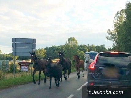 Region: Do ruchu na jezdni włączyły się… konie