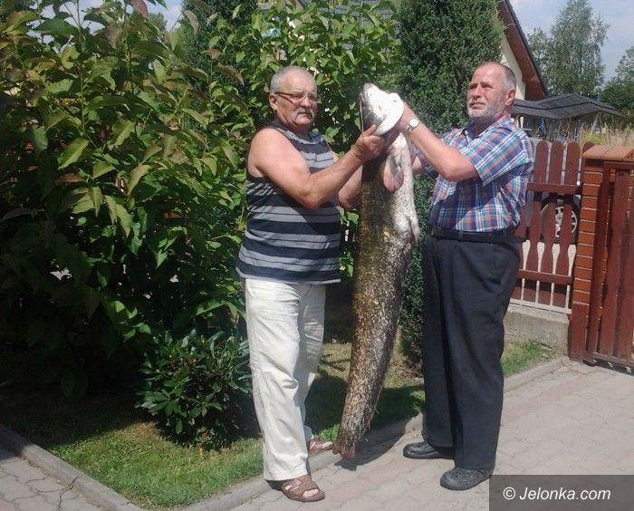 Mysłakowice: Taaaaka ryba w Mysłakowicach