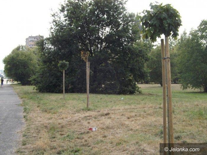 Jelenia Góra: Czytelnik: niech ktoś podleje młode drzewka!