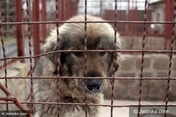 Jelenia Góra: Wakacje, czyli sezon… porzucania psów