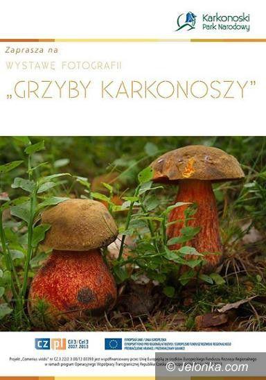 """Jelenia Góra: """"Grzyby Karkonoszy"""" w obiektywie"""