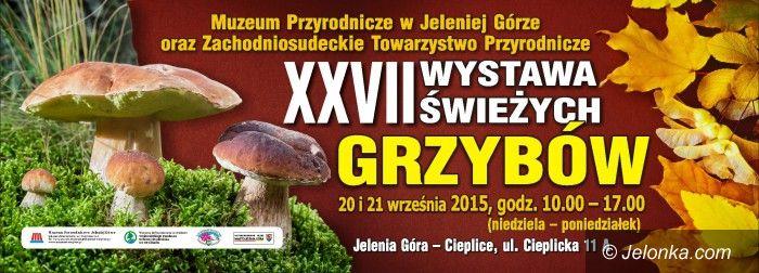 Jelenia Góra: XXVII Wystawa Świeżych Grzybów w Cieplicach
