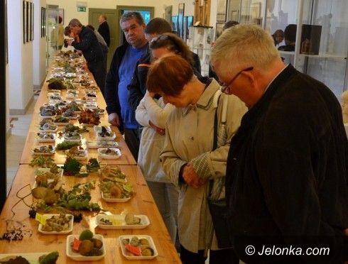 Jelenia Góra: 160 gatunków grzybów w Muzeum Przyrodniczym