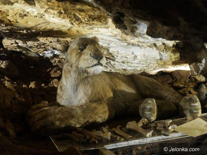 Region: Prehistoryczny lew w Jaskini Niedźwiedziej