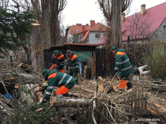 Jelenia Góra: Trwa wycinka starych i chorych drzew