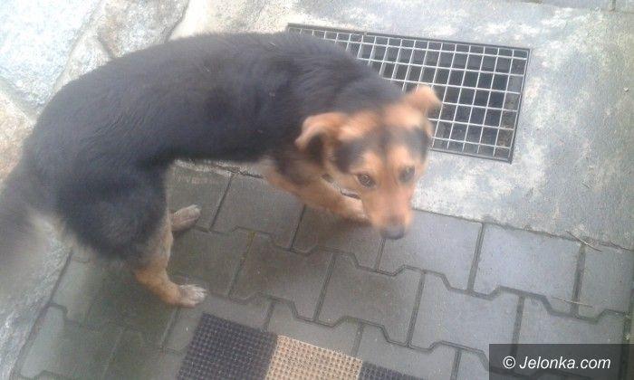 Jelenia Góra: Czyj jest ten pies?