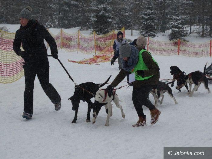 Szklarska Poręba: Psy w zaprzęgach pod opieką adeptek weterynarii