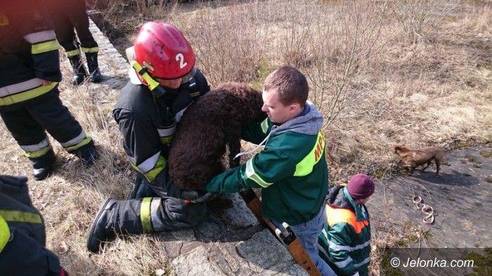 Jelenia Góra: Psy w niecce basenu na Rakownicy