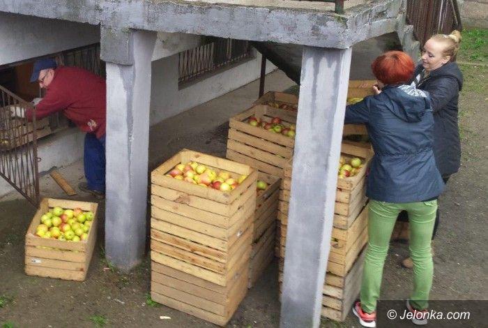 Janowice Wielkie: Jabłka dla Janowic Wielkich