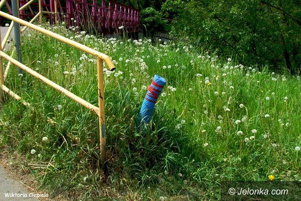 Jelenia Góra: Złodzieje okradli… drogę rowerową