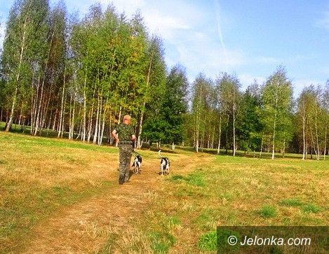 Jelenia Góra: Na Zabobrzu będzie park dla psów