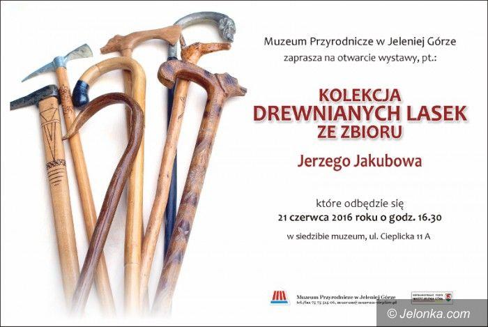 Jelenia Góra: Laski Jerzego Jakubowa w Muzeum Przyrodniczym