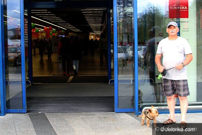 Jelenia Góra: Psy w Galerii Sudeckiej mile czy niemile widziane?