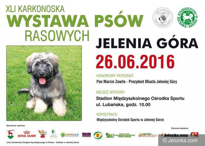 Jelenia Góra: Karkonoska wystawa psów rasowych już w niedzielę