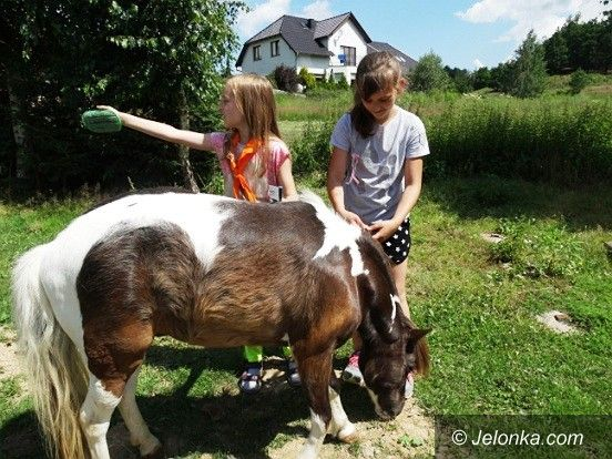 Jelenia Góra: Półkolonie w MDK na półmetku