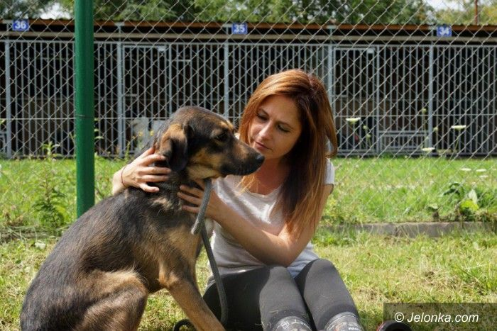 Jelenia Góra: Przygarnij psiaka z Jelonką.com